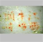 Jiangxi Niu Fu Shun Zao_19_09